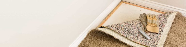 Mold on carpets and rugs